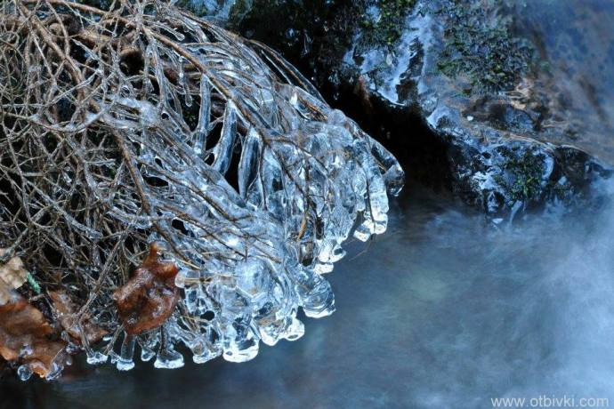 Ледени клони